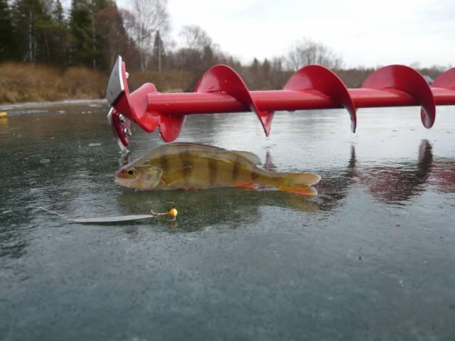 когда открывают сезон рыбалки 2016