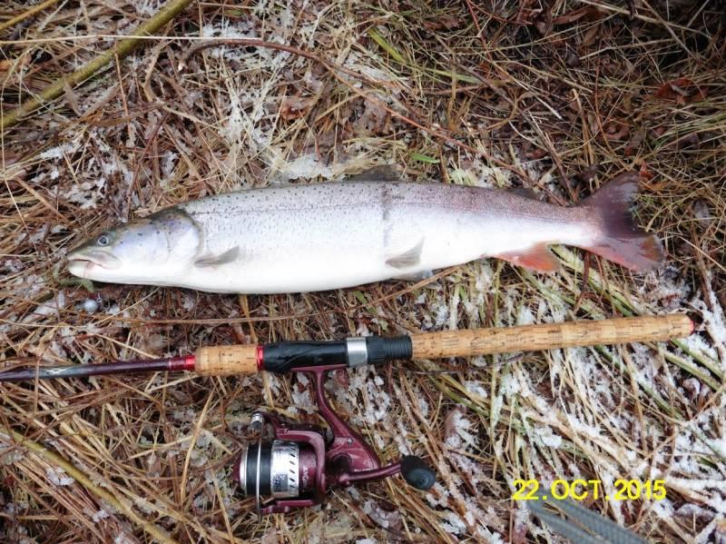 ловля рыбы в городце